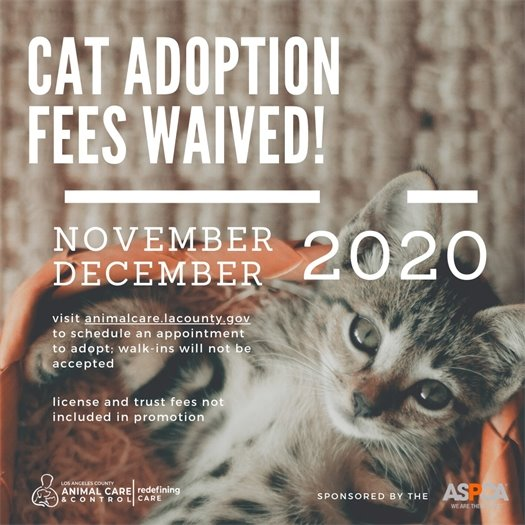 Cat Adoption Fees Waived