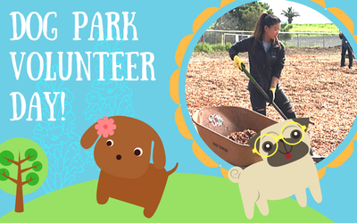 Dog Park Volunteer Day Spotlight