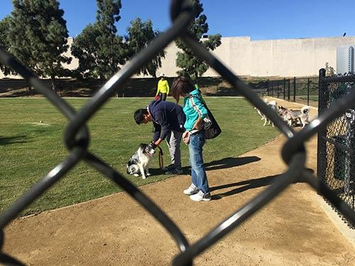 Man Pets Dog Behind Chainlink Fence at Eastview Dog Park Ribbon Cutting