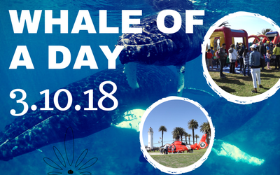 Whale of A Day 2018