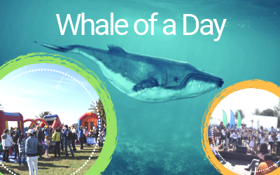 Whale of a Day spotlight