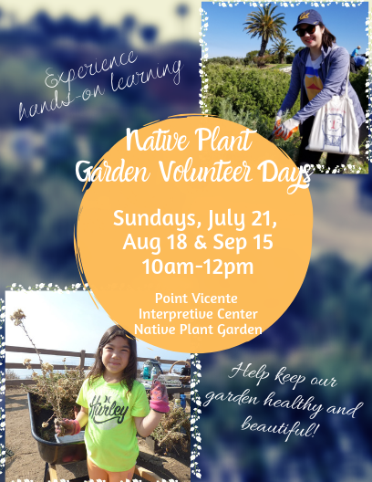 summer native plant garden spotlight